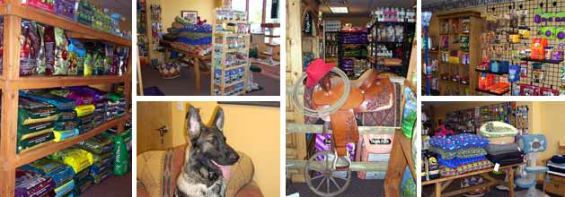 Collage of pictures of the Four Paws and Co. shop