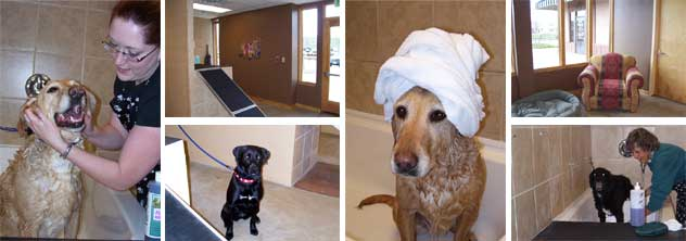 Four paws co dog wash self serve washing grooming dog washing is now offered solutioingenieria Image collections